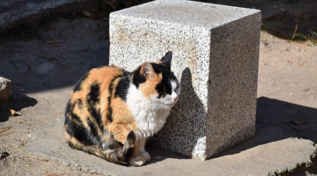 华山北峰顶的猫 1 1038x576 - 我在华山拍猫