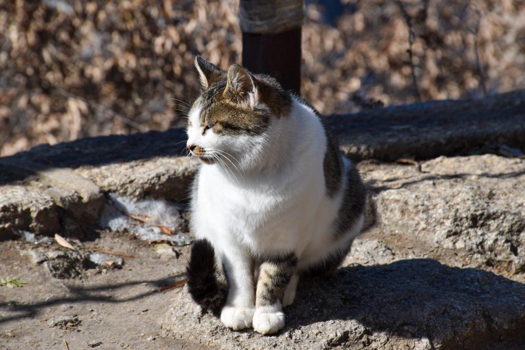 华山北峰顶的猫 2 1024x683 - 我在华山拍猫