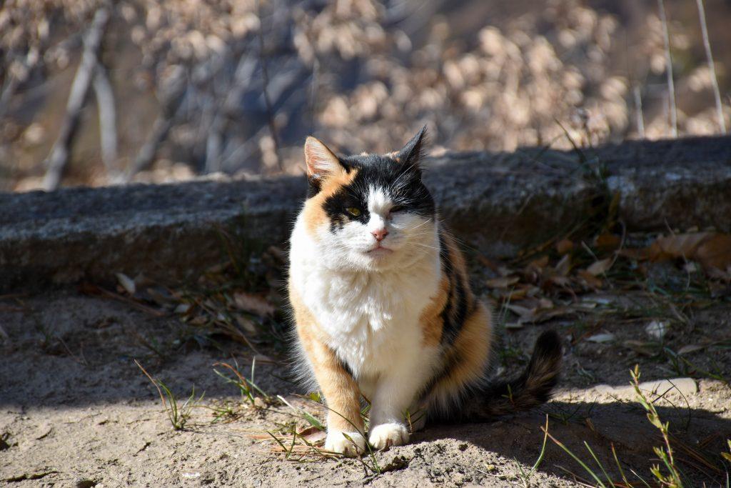 华山北峰顶的猫 3 1024x683 - 我在华山拍猫