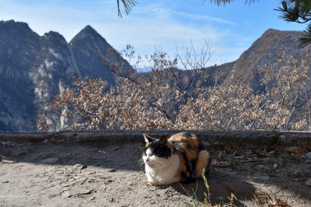 华山北峰顶的猫 4 1024x683 - 我在华山拍猫