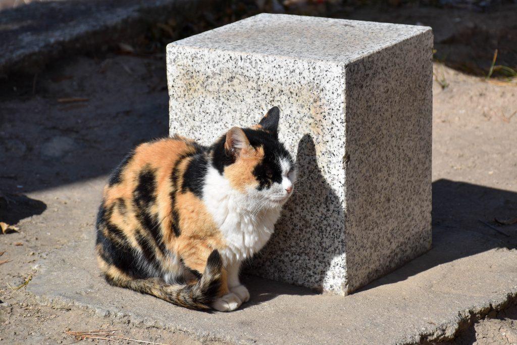 华山北峰顶的猫 6 1024x683 - 我在华山拍猫