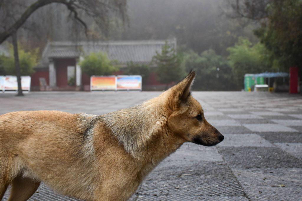 狗 1024x683 - 我在麦积山拍雾