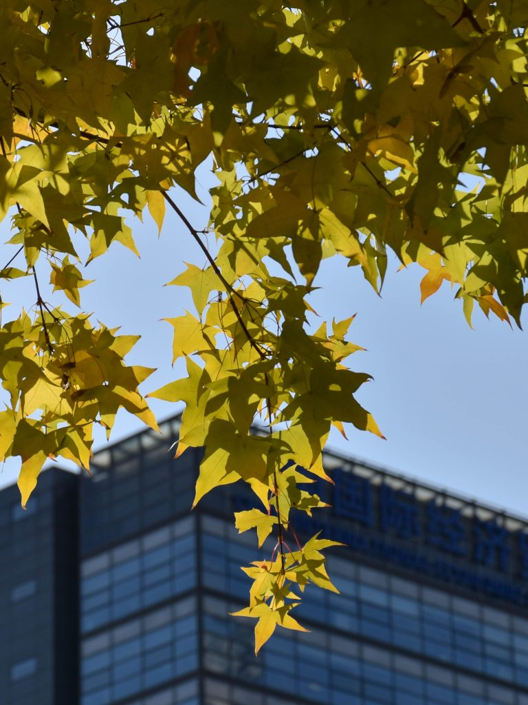 北京秋景 枫 2 768x1024 - 秋游京城