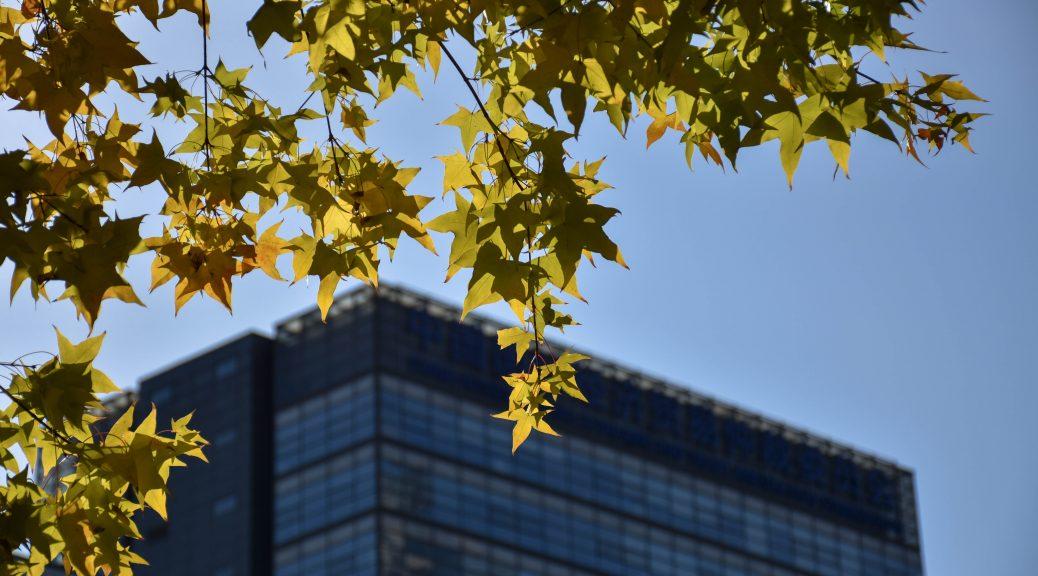 北京秋景 枫 3 1038x576 - 秋游京城