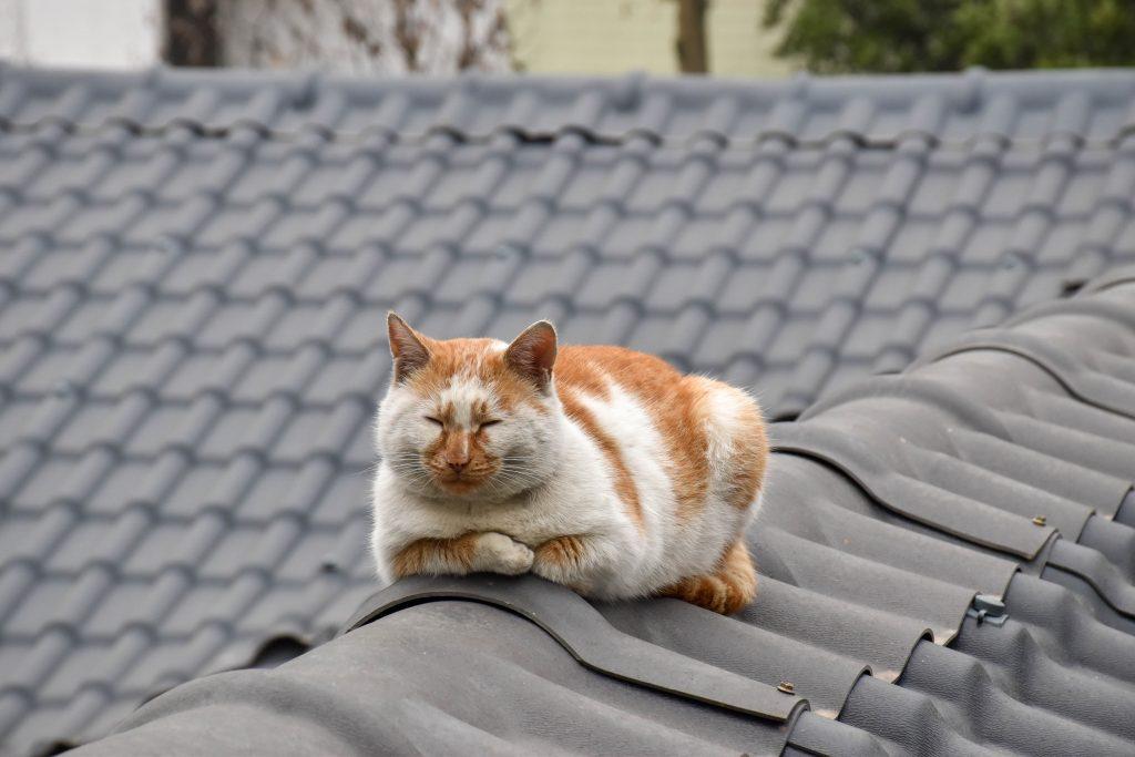 橘猫 1 1024x683 - 初冬随手拍