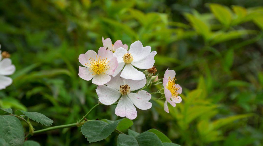 无名小花 1 1038x576 - 无名小花