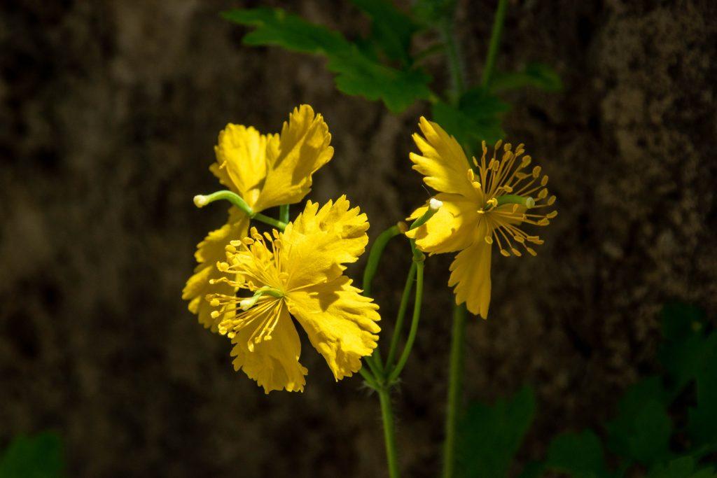 黄色の小花 1024x683 - 春(夏?)游兴隆山