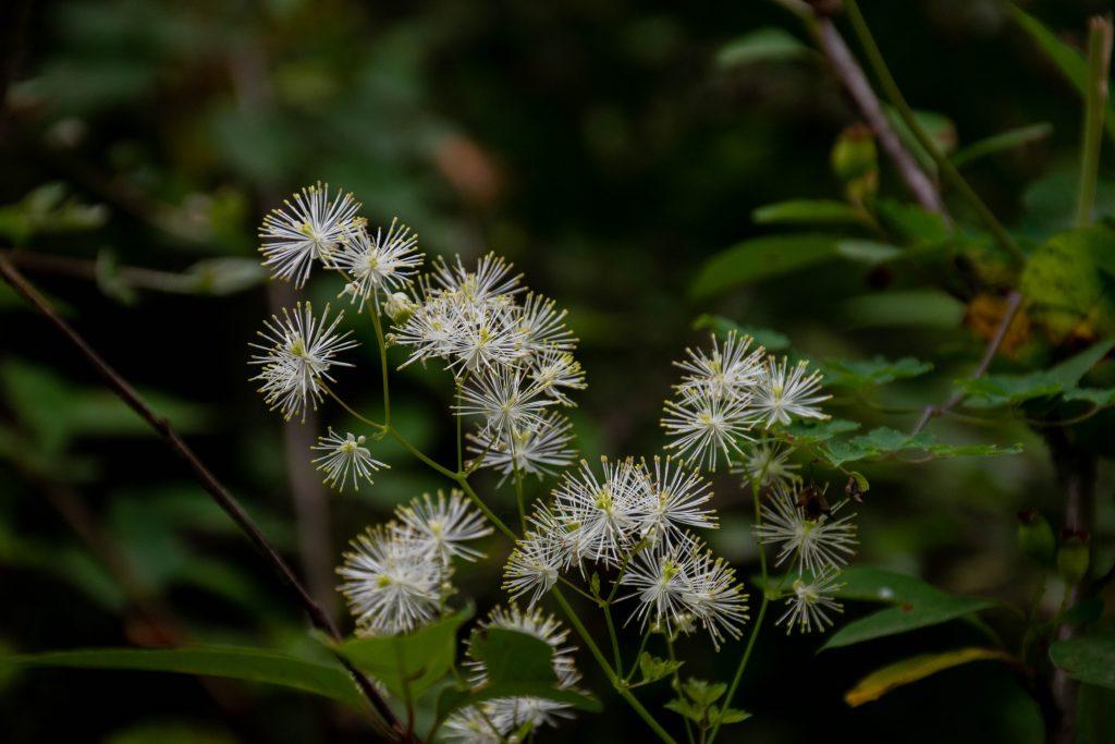 白色の小花 1024x683 - 渭河源之行