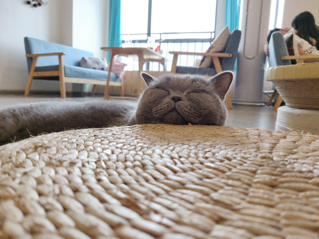 猫 3 1024x768 - 猫咖一日游