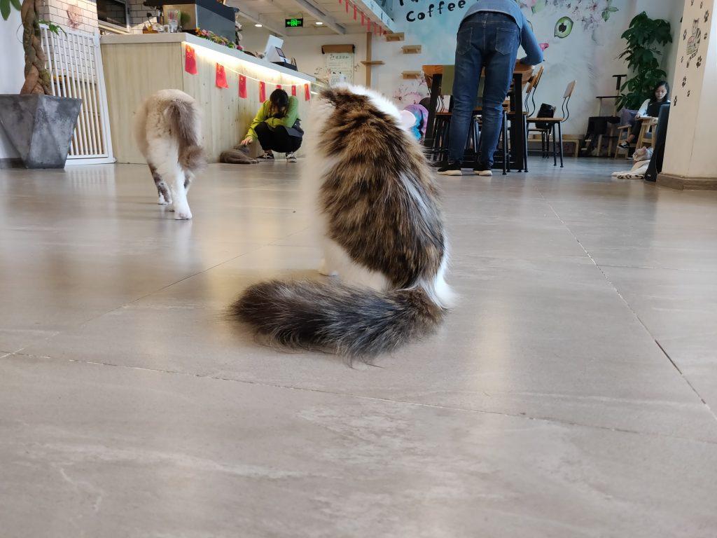 猫 6 1024x768 - 猫咖一日游