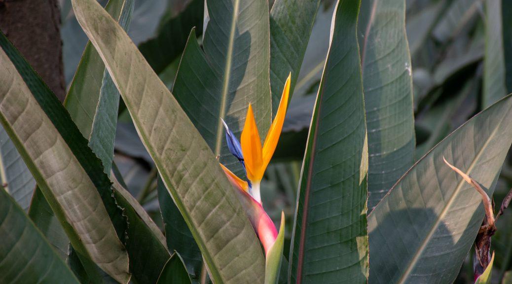 花 1 1038x576 - 游植物园