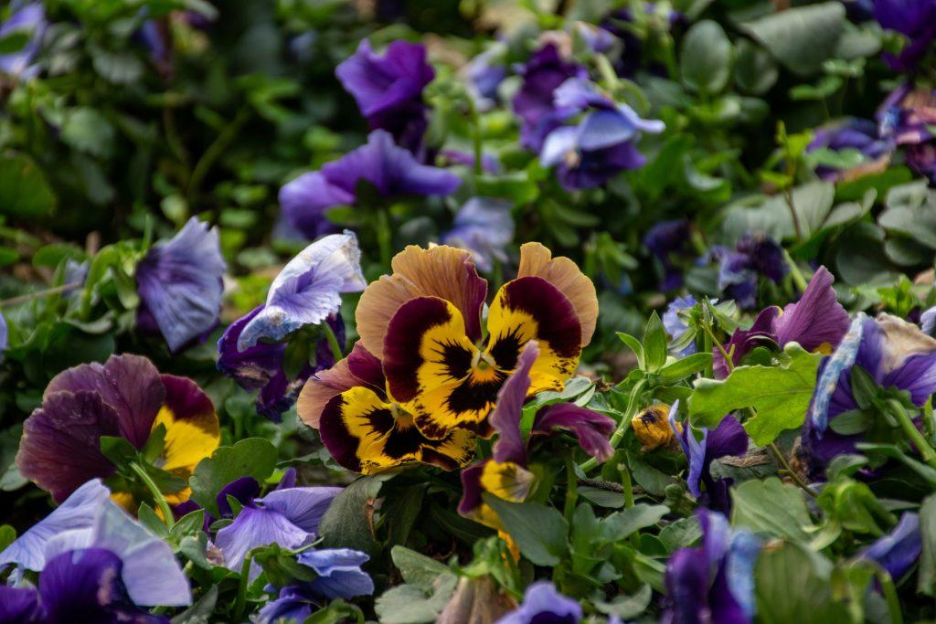 花 3 1024x683 - 游植物园